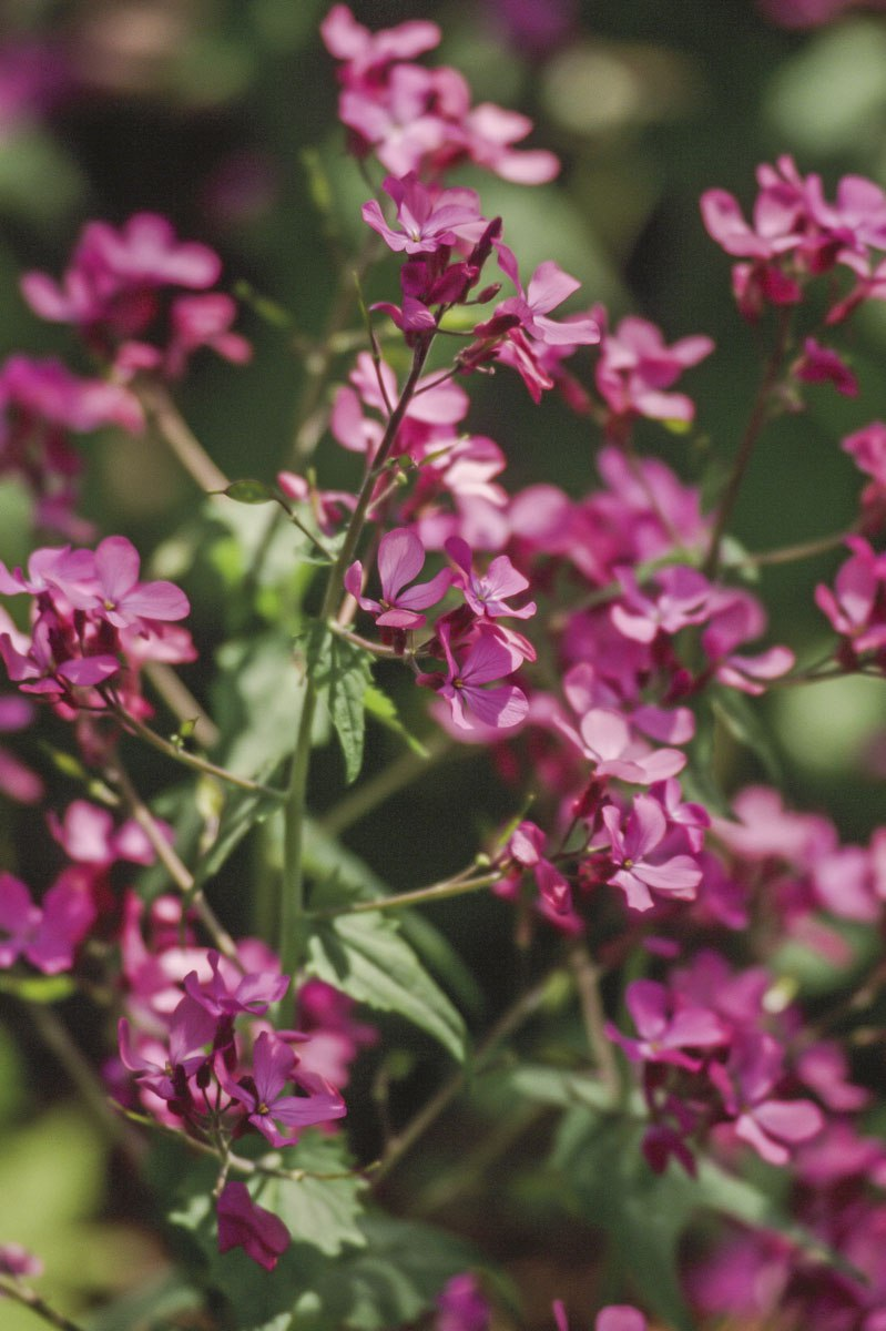 200309_Flowers_02