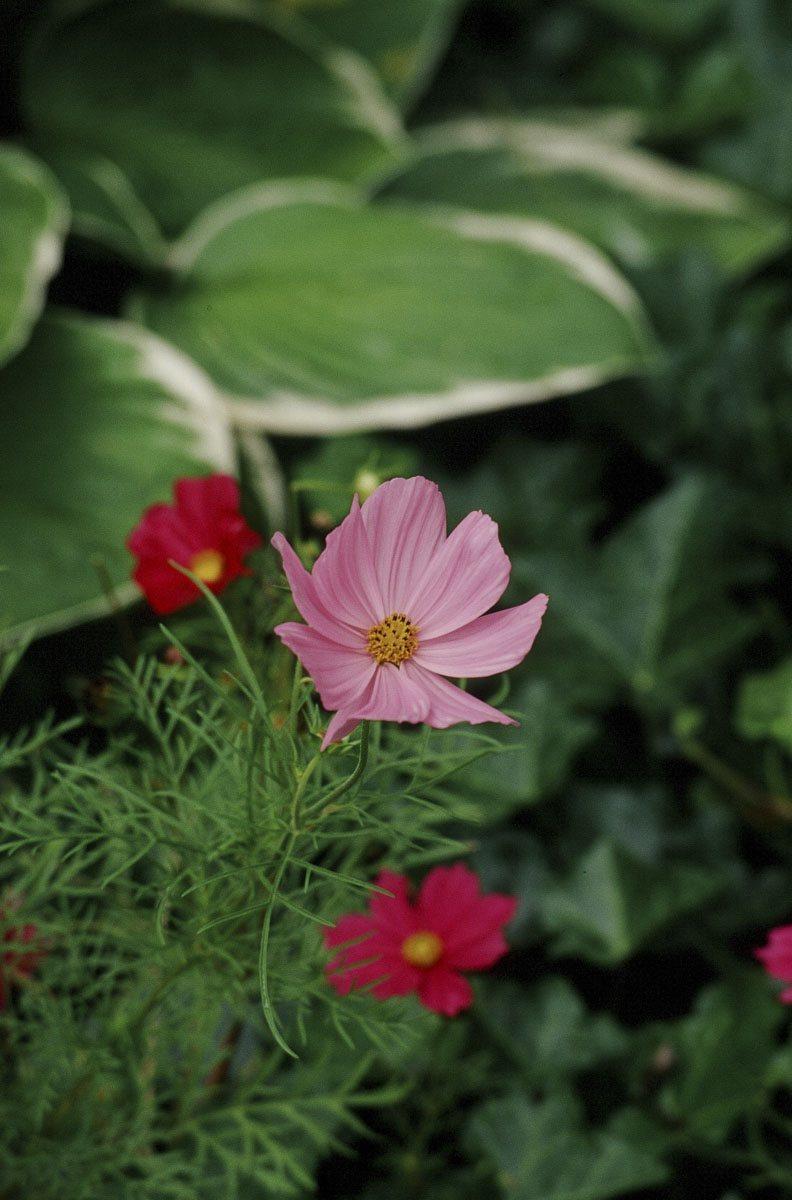200309_Flowers_13