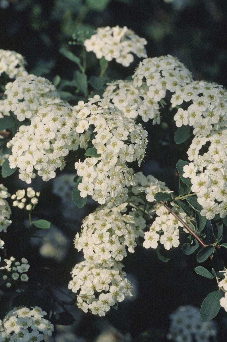 200309_Flowers_17