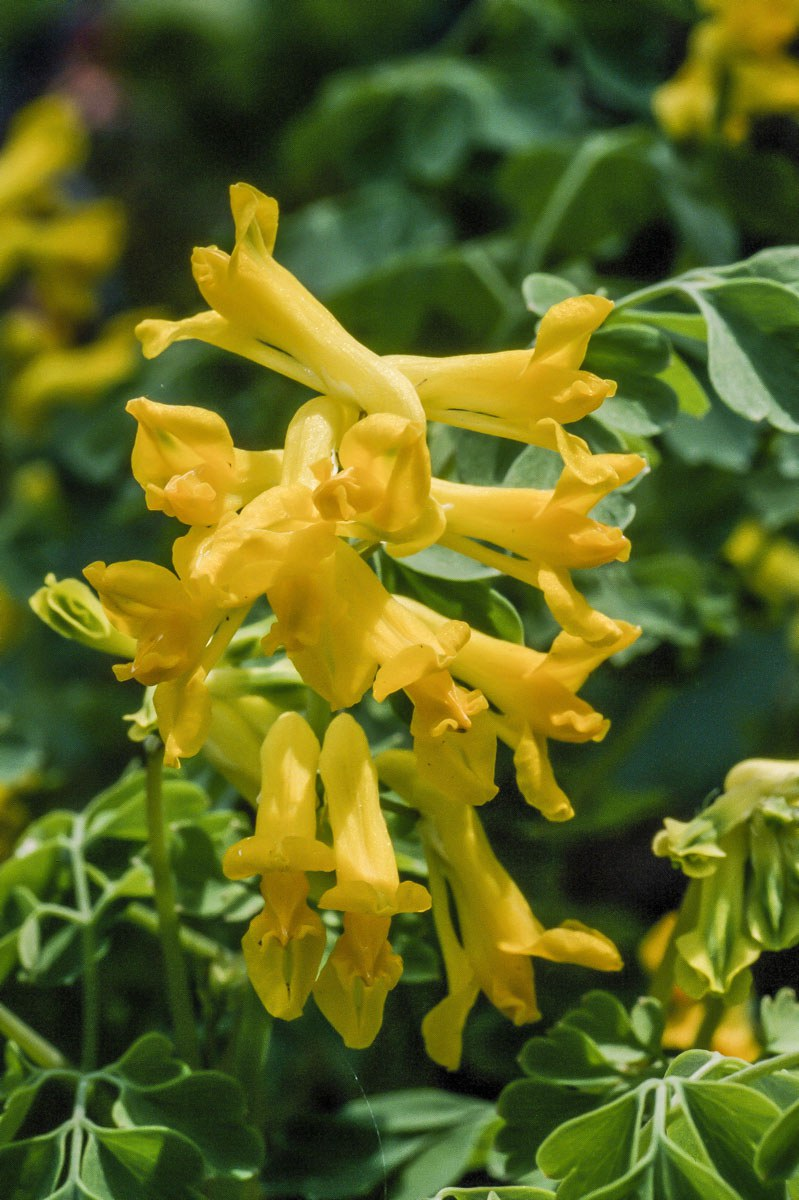 200309_Flowers_25