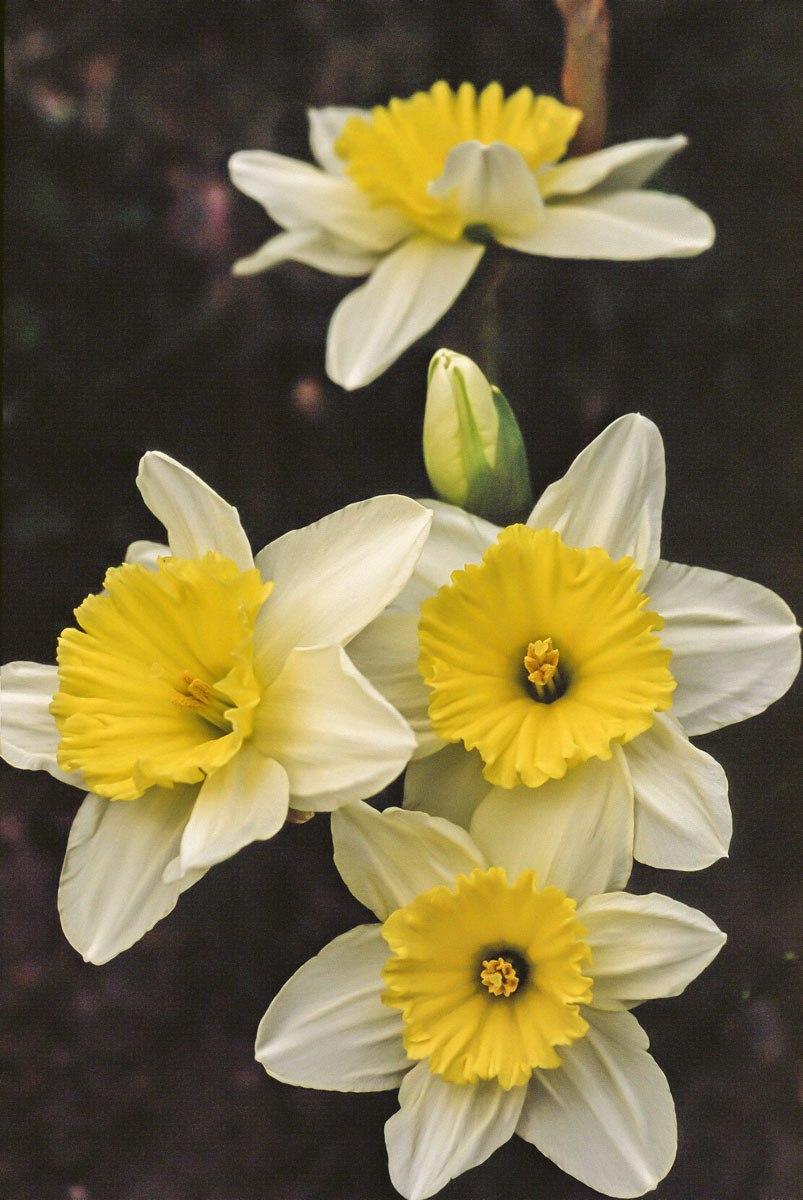 200309_Flowers_28