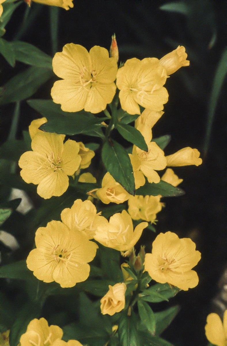 200309_Flowers_33