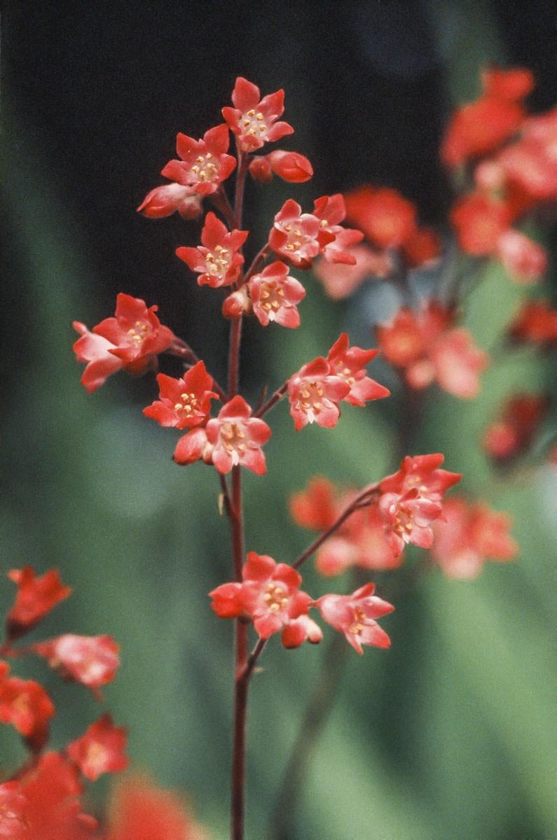200309_Flowers_34