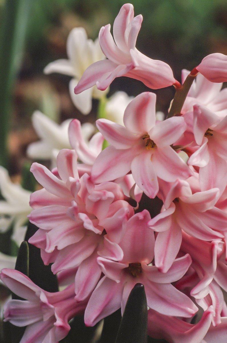 200309_Flowers_35